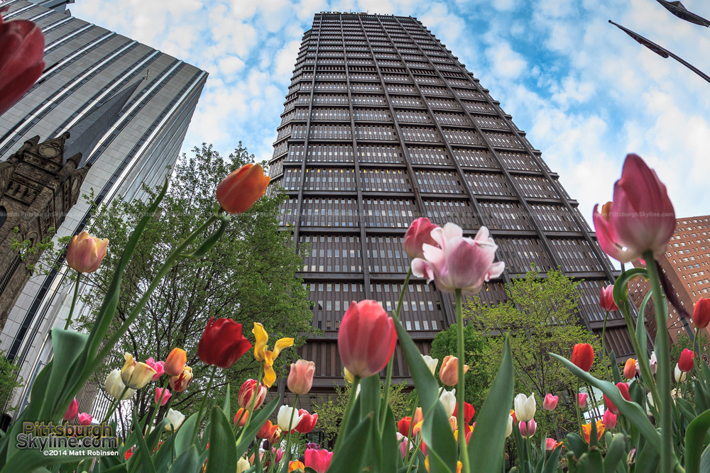 Tulips rising with the US Steel Tower in Pittsburgh