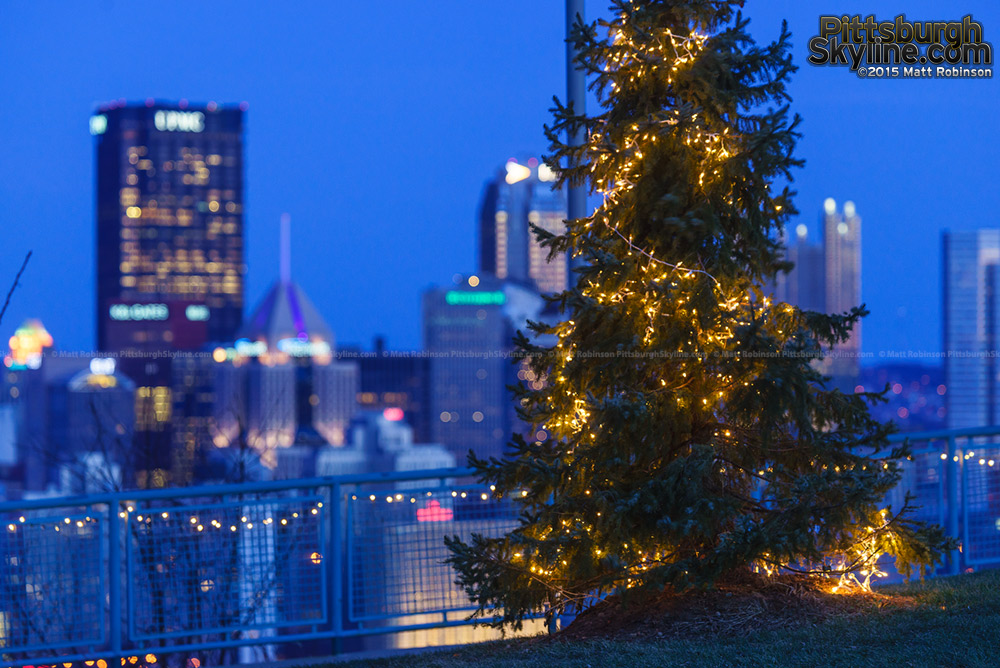 Close up of tree with lights at the West End Overlook